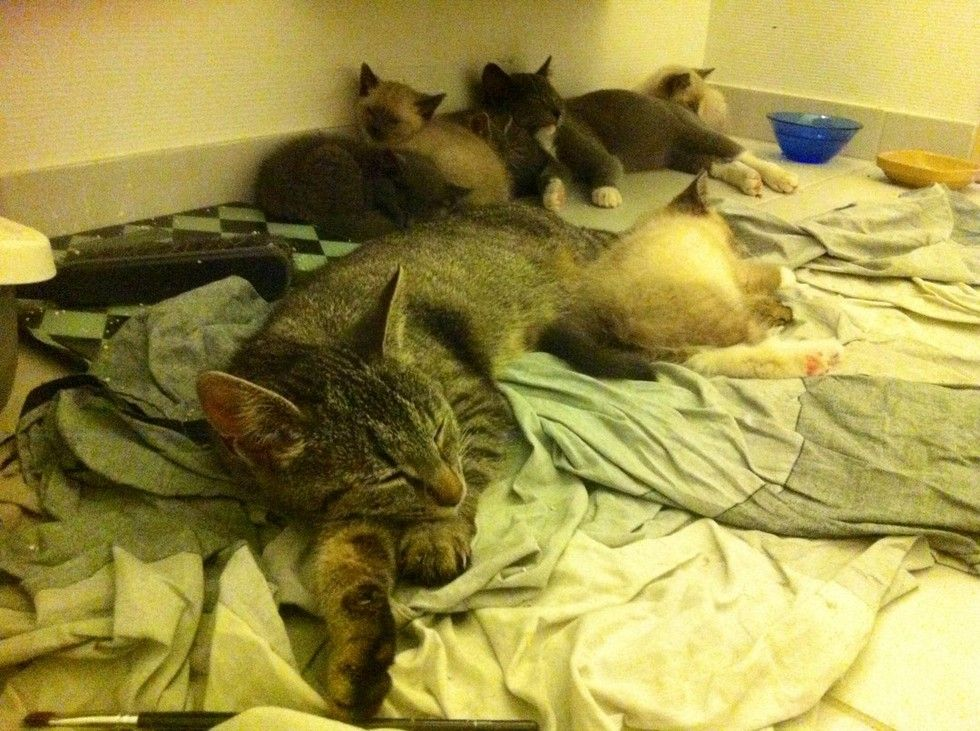 stray cat brings her kittens to family
