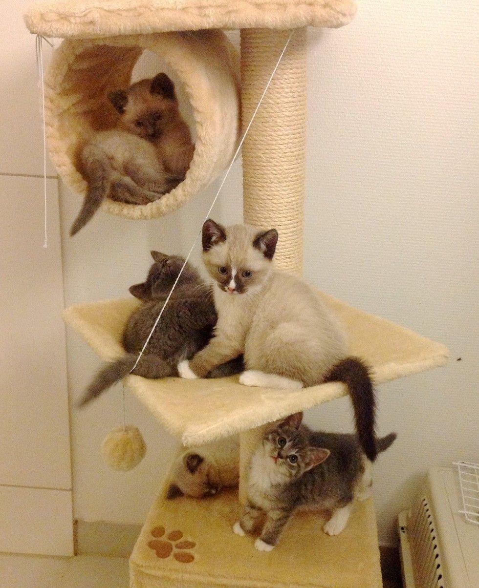 kittens tree playing