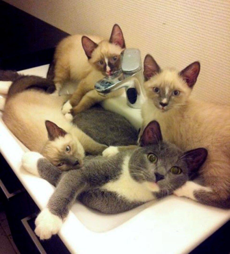 rescue kittens in sink