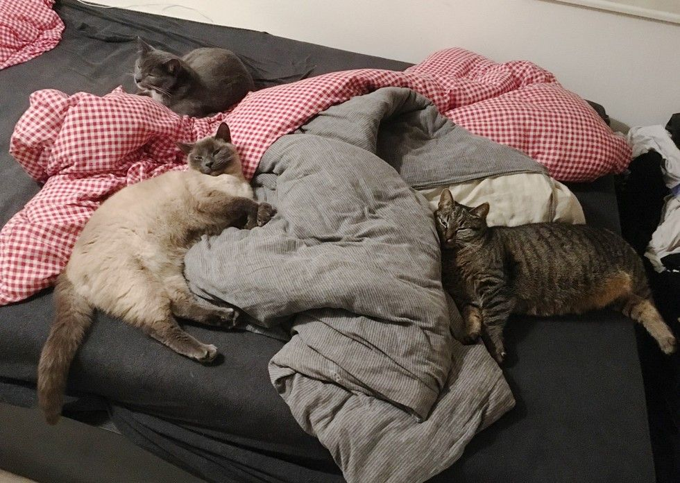 stray cat brings her kittens to family bed