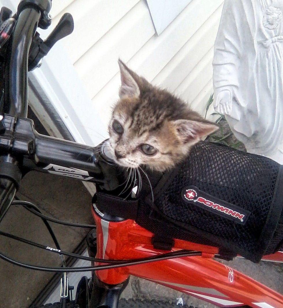 kitten found lifeless on roadside came back to life