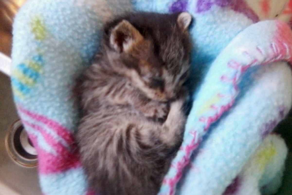kitten rescued from roadside recovery