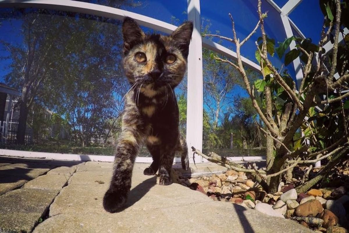 tortie stray cat rescued by vet after car accident