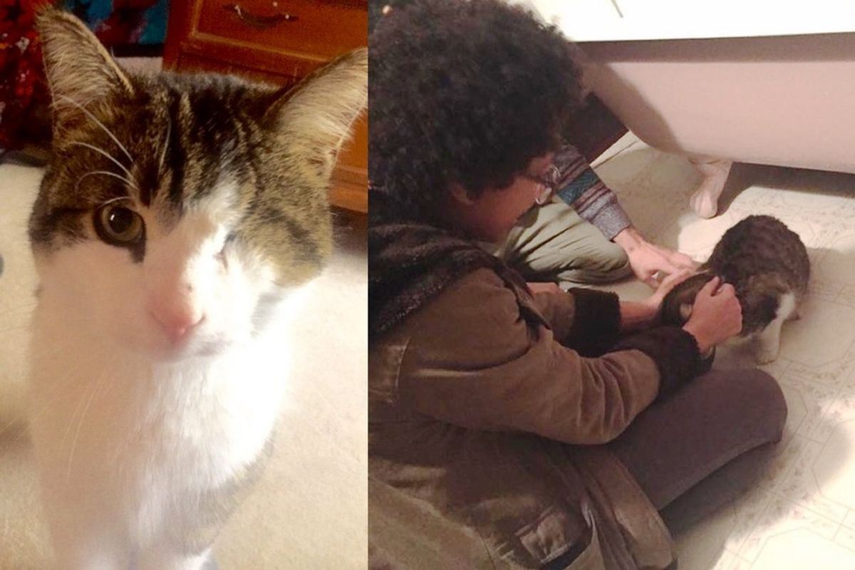 lost one-eyed cat found his family after 8 months