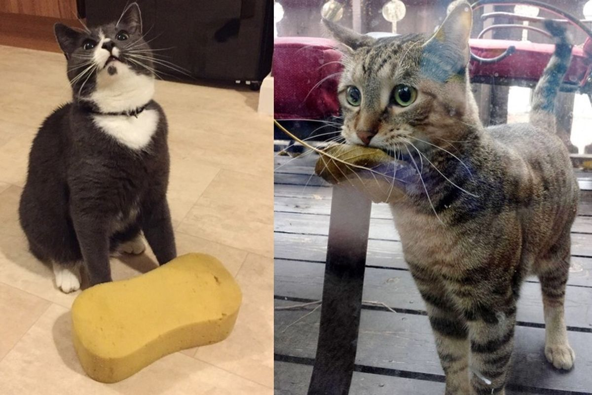 cats bring their humans unusual gifts
