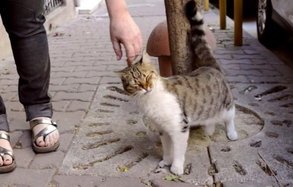 Instabul city cats are king