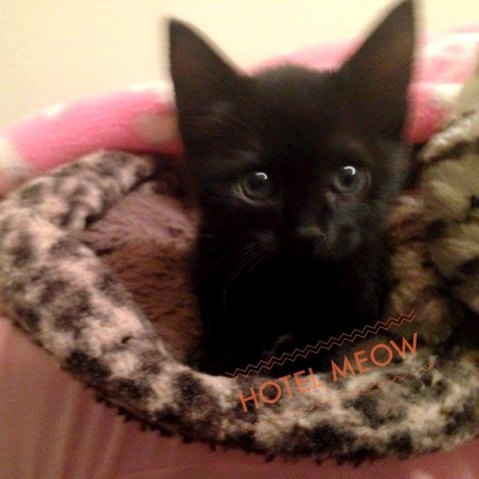 orphaned kitten 10 days old little fighter