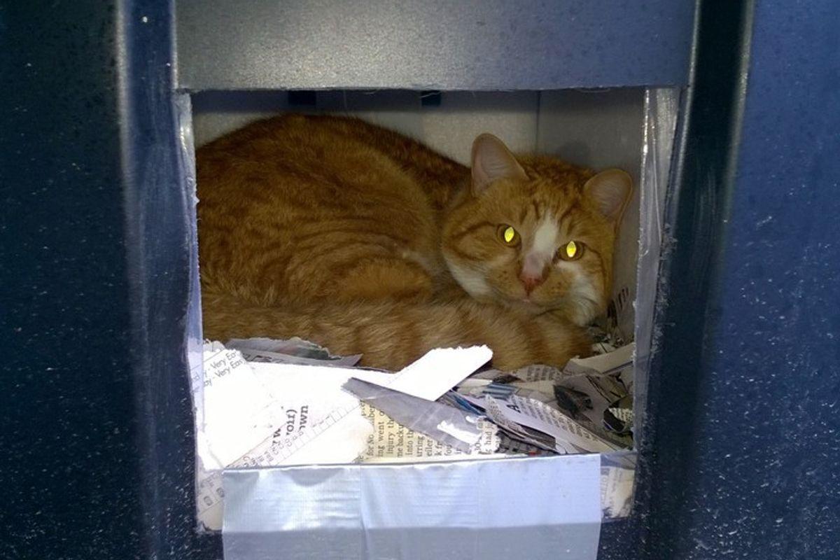man built shelter for an abandoned cat
