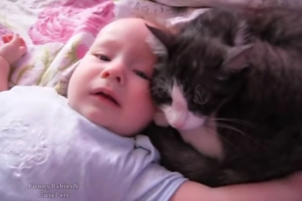 loving cat comforts crying baby talking to him
