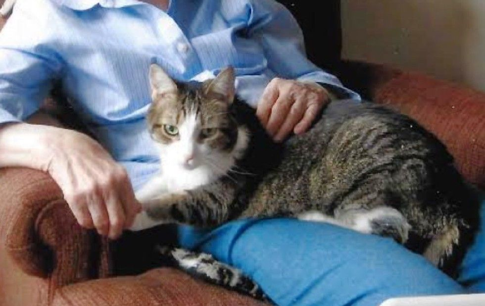 grandma and beloved cat gabby died within hours of each other
