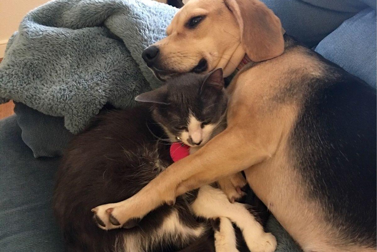 shelter cat adopted by beagle dog hug