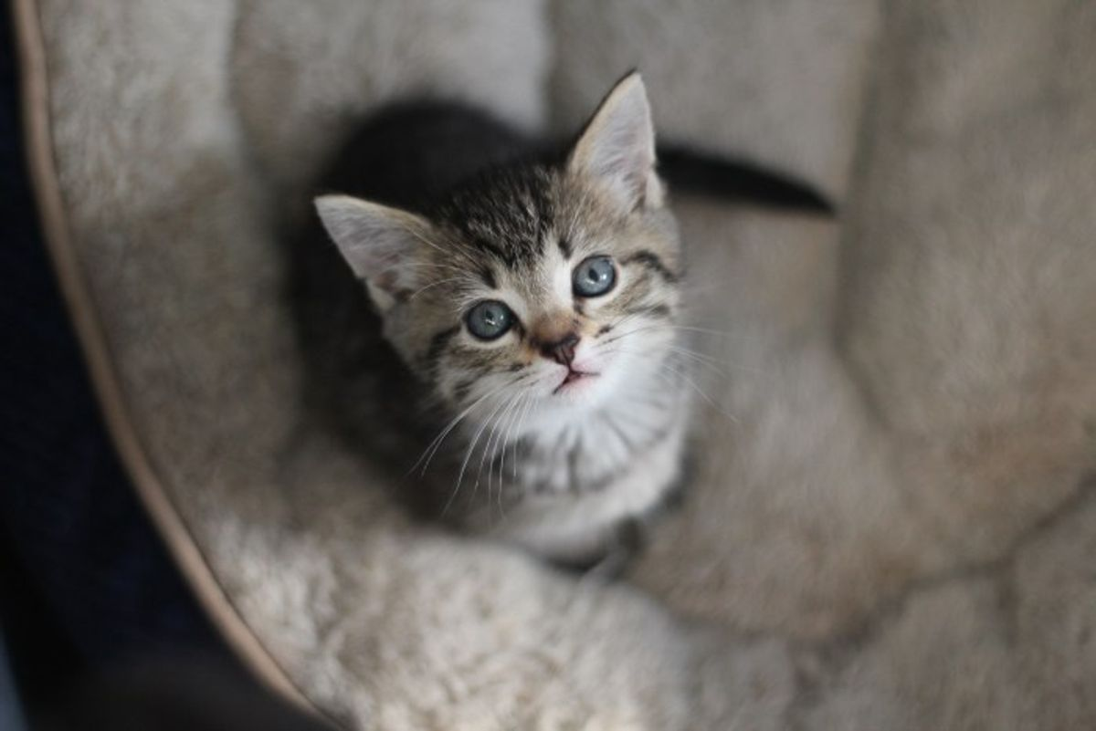 These Kittens Were Born in Foster Care. Six Weeks Later, See How Much They've Grown!