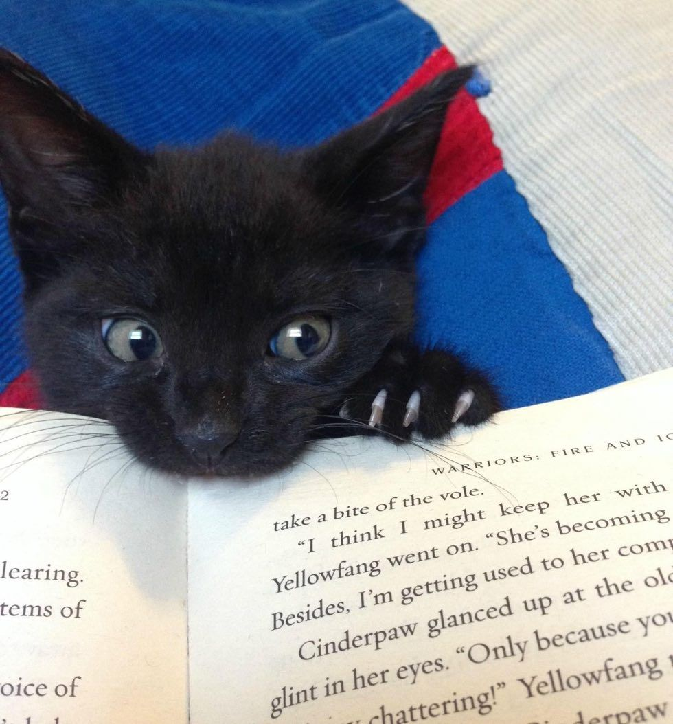 cats kittens purrfect perfect bookmarks