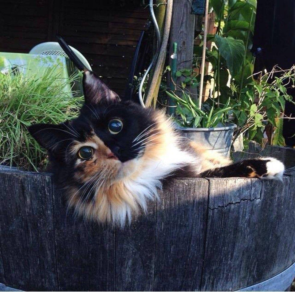 blind rescue calico cat jasmine forever home