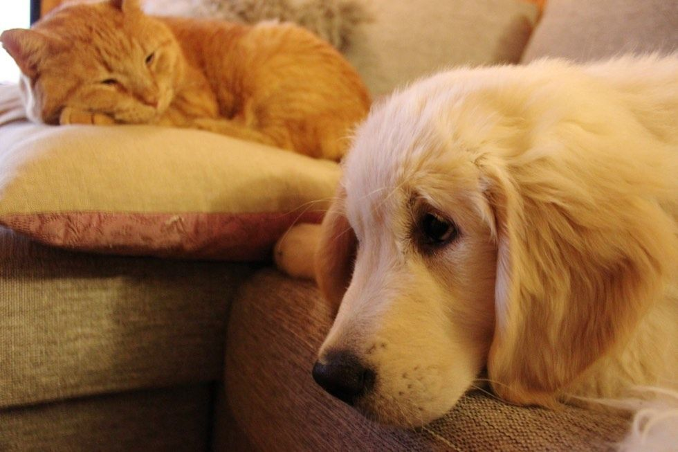 puppy tries to win over heart of ginger cat