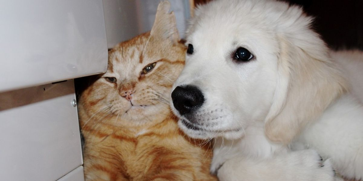 Puppy Tries to Win Over the Heart of a Ginger Cat, A Month Later...