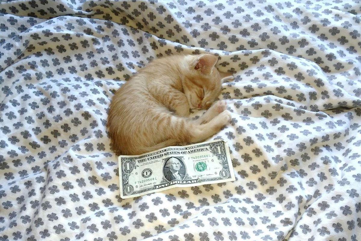 rescued ginger kitten size of dollar bill