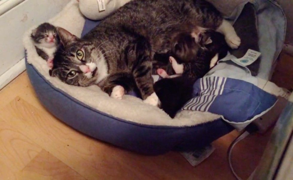 feral cat accepts help from rescuers for her newborn kitten babies