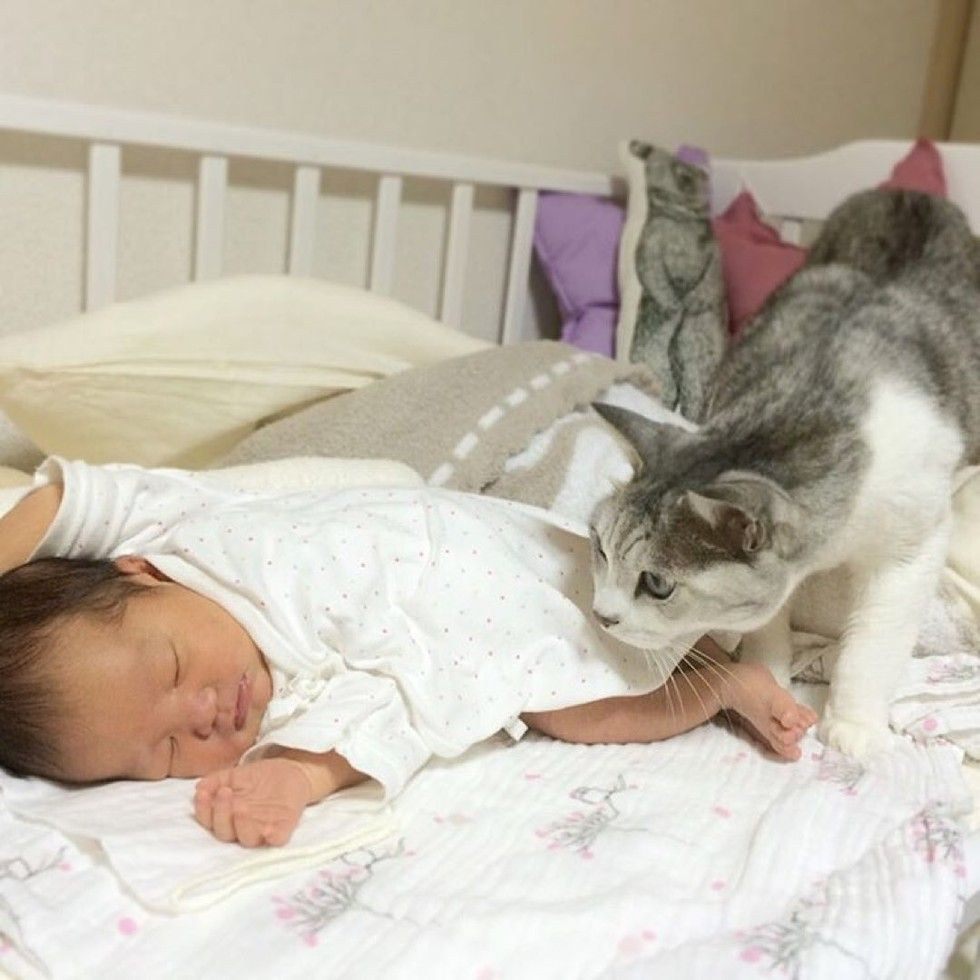15 year old cat guards baby sister