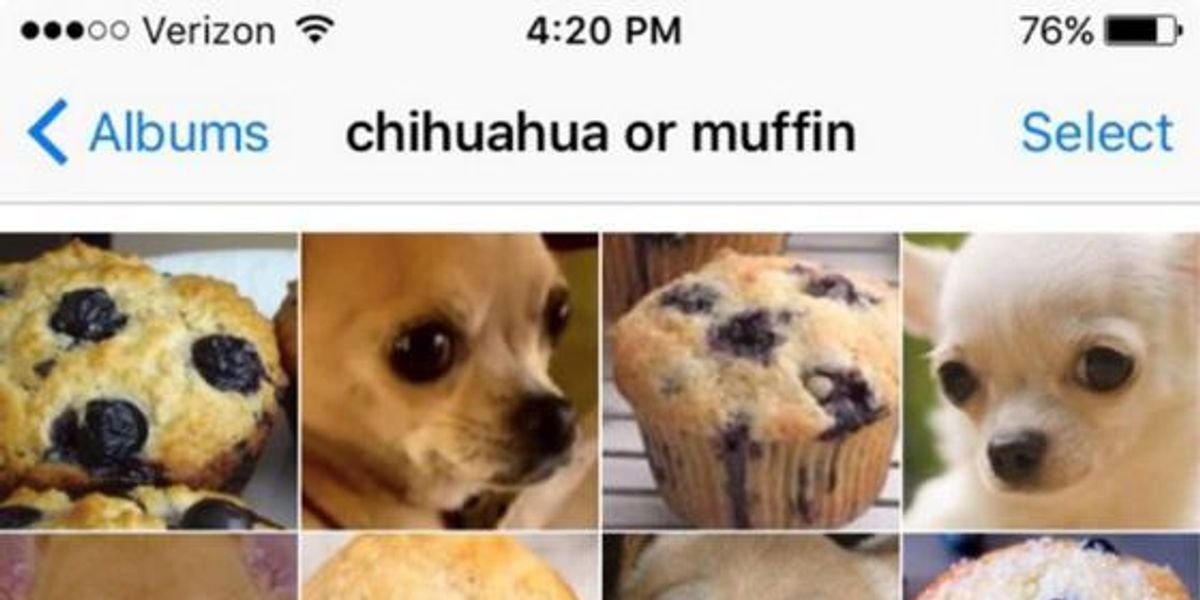 "This ""Puppy Or Bagel"" Meme Is The Best Thing To Happen To The Internet"