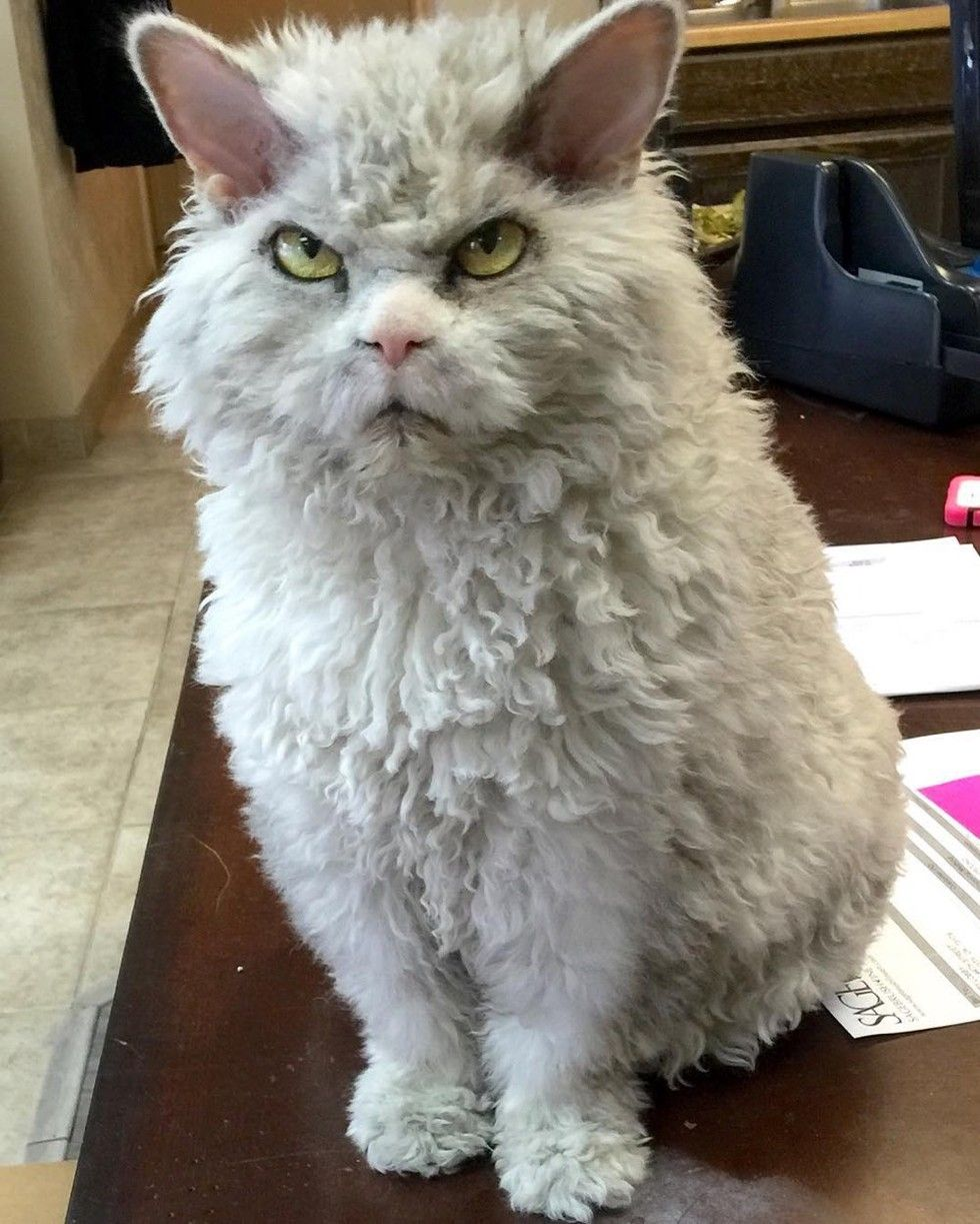pompous albert cat frowning staring