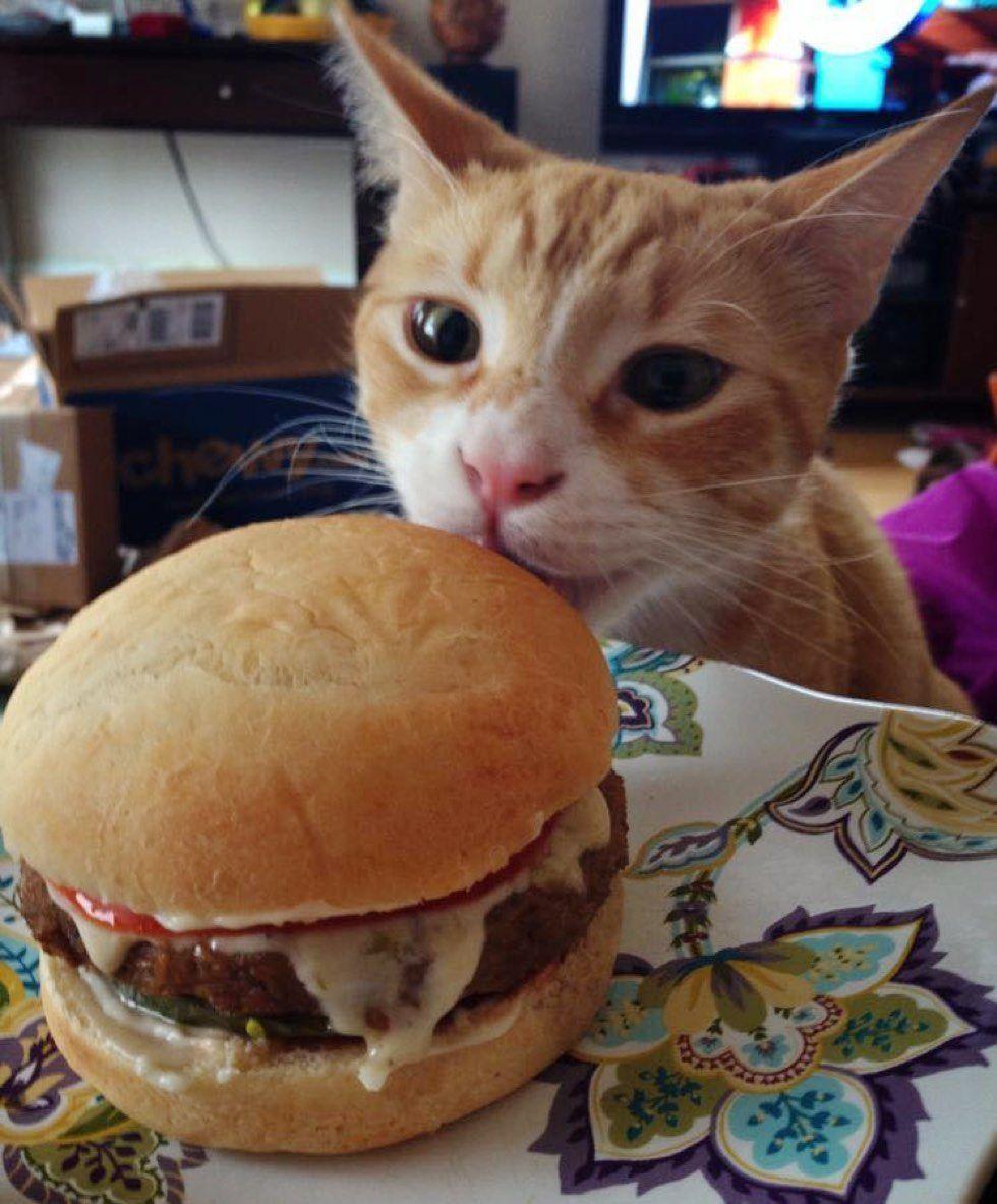 fenn the destroyer cat taste burger