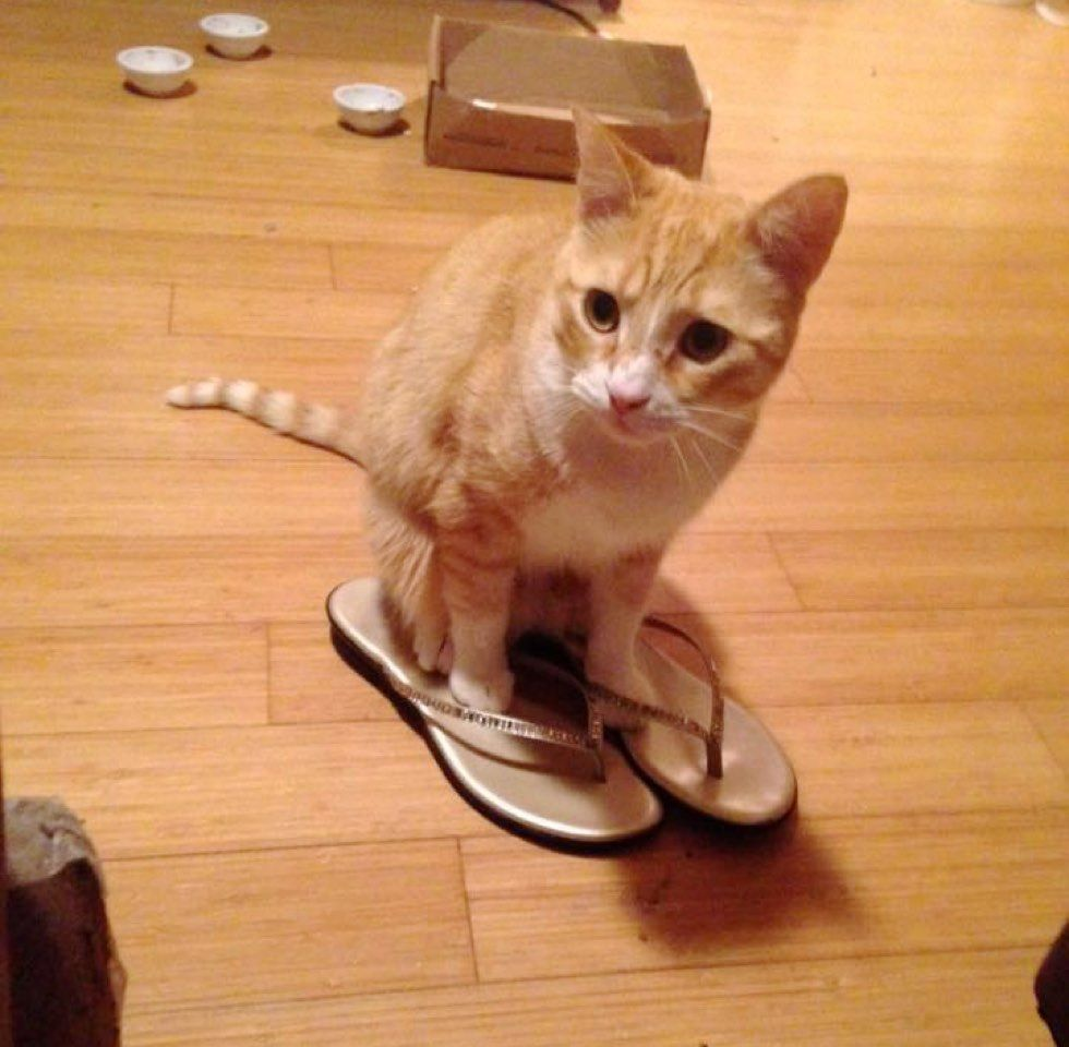 fenn the destroyer cat wears sandals