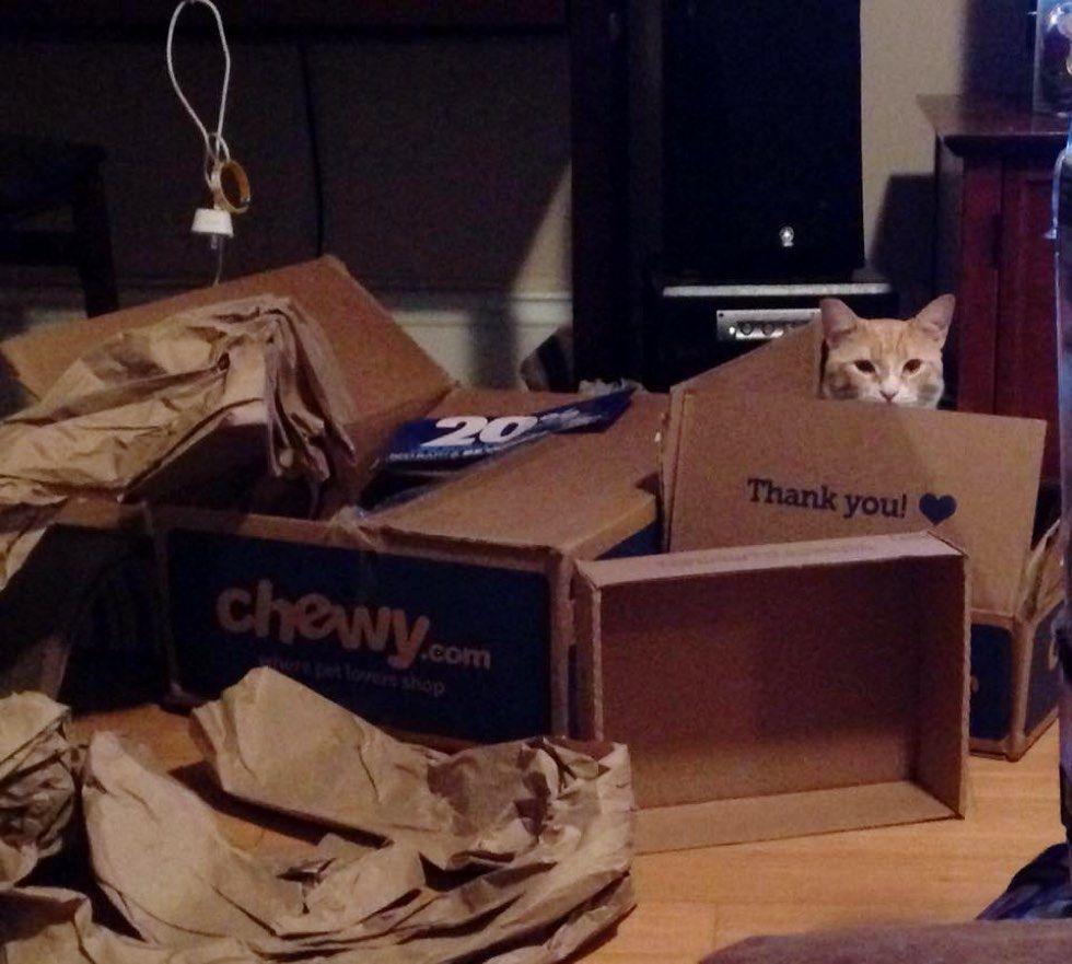 fenn the destroyer cat boxes