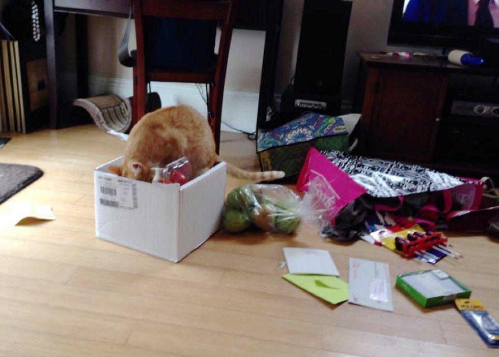 fenn the destroyer cat mischief groceries box