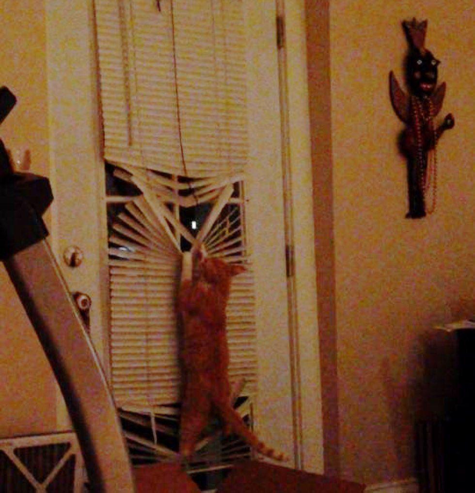 fenn the destroyer cat mischief maker blinds