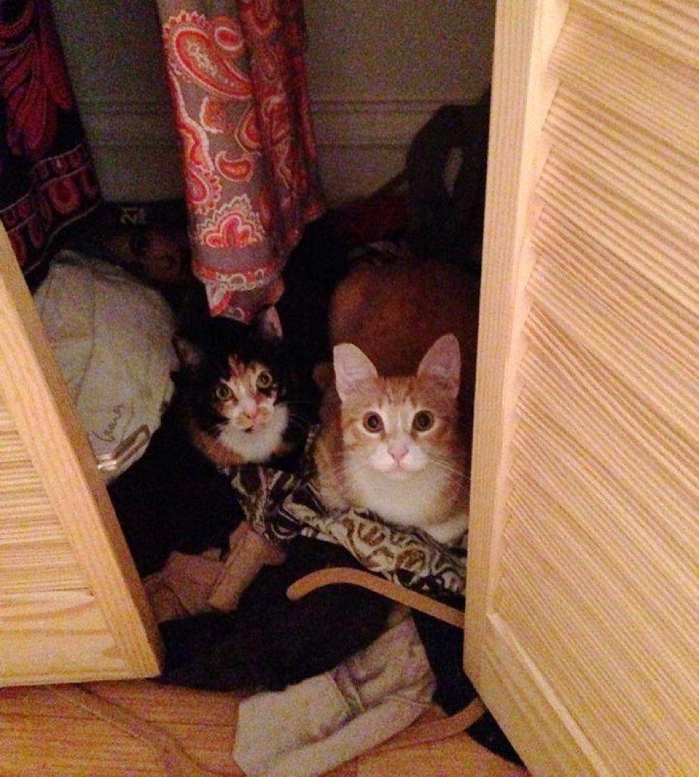 fenn the destroyer cat mischief makers