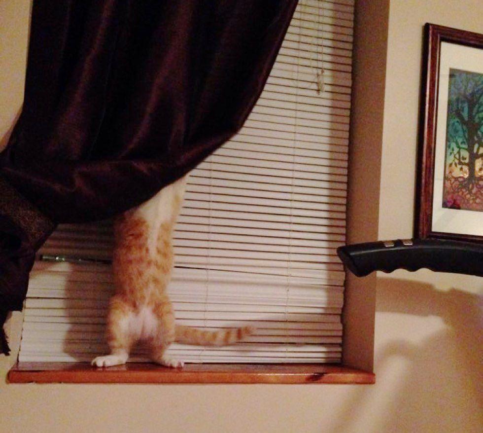 fenn the destroyer cat mischief hide and seek curtain