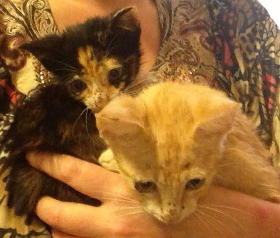 rescue feral kittens