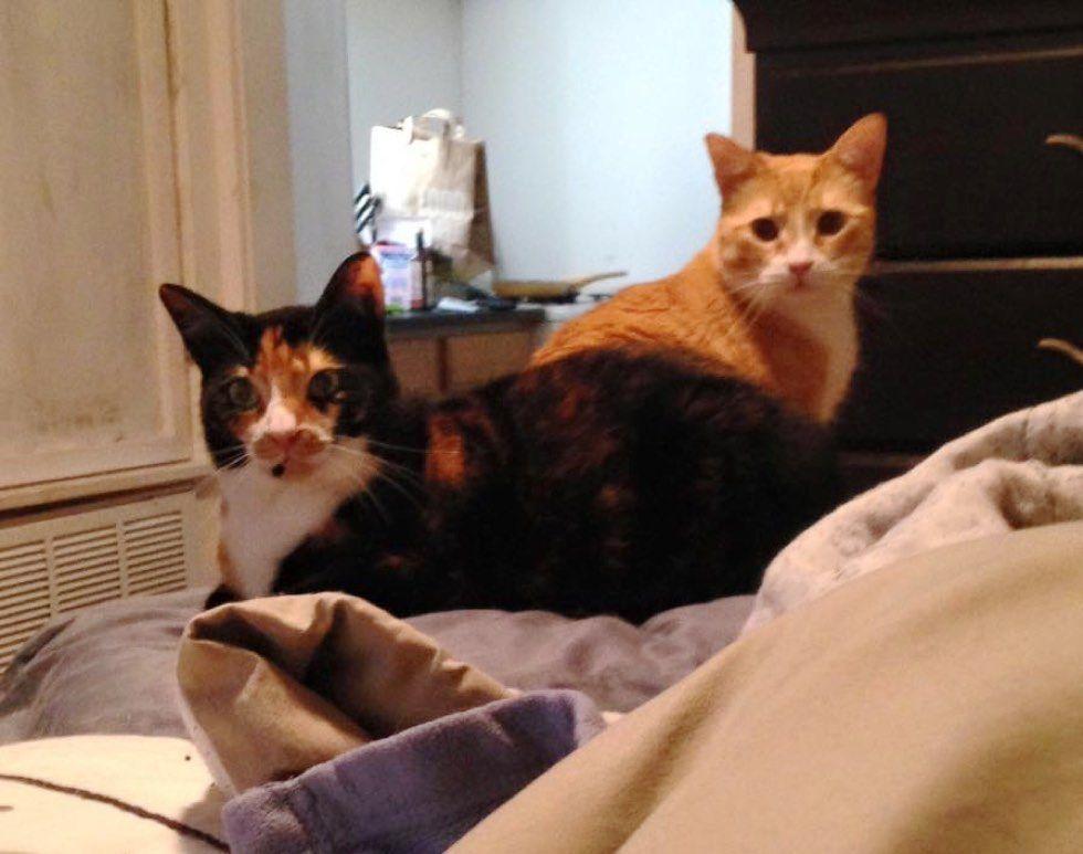 fenn the destroyer cat mischief