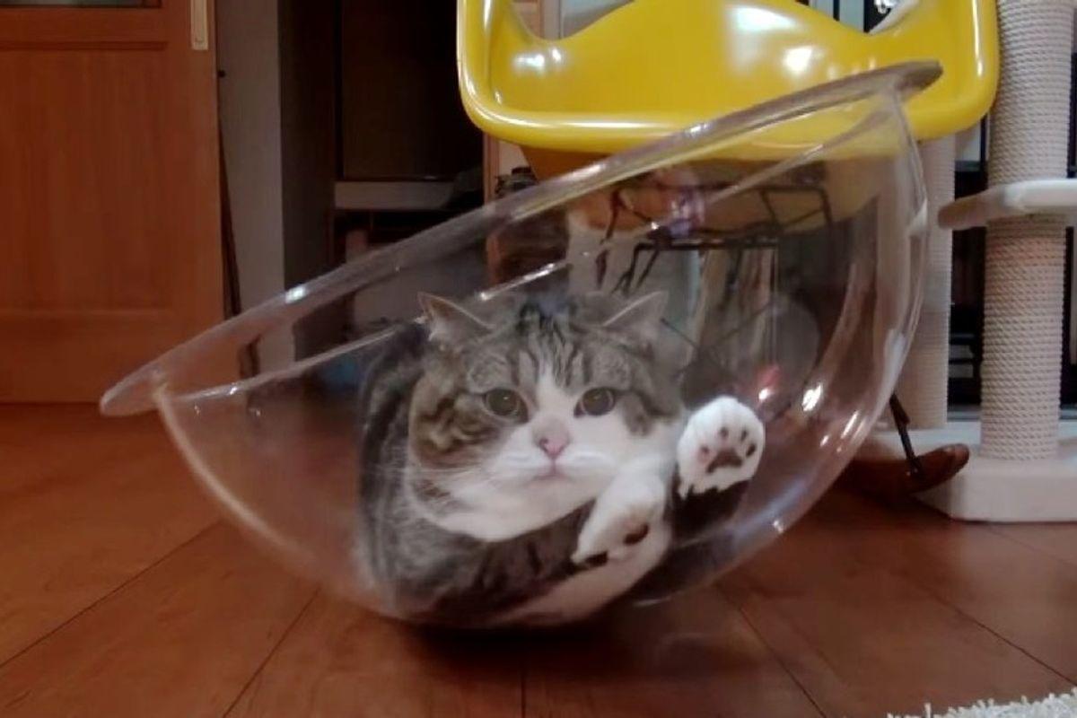 maru cat in clear bowl chair