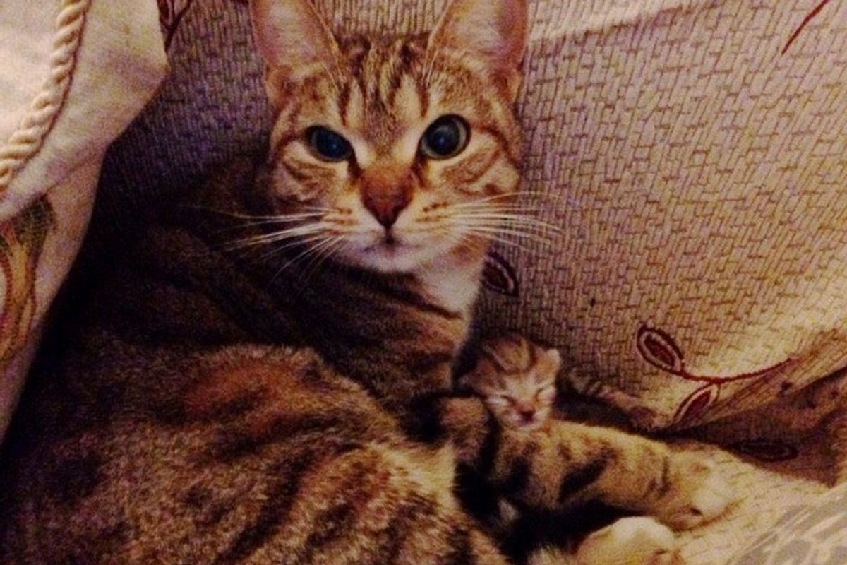 stray cat brings surprise to man's couch