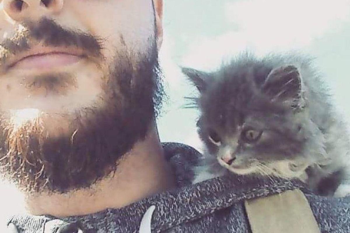 man rescued feral barn kitten