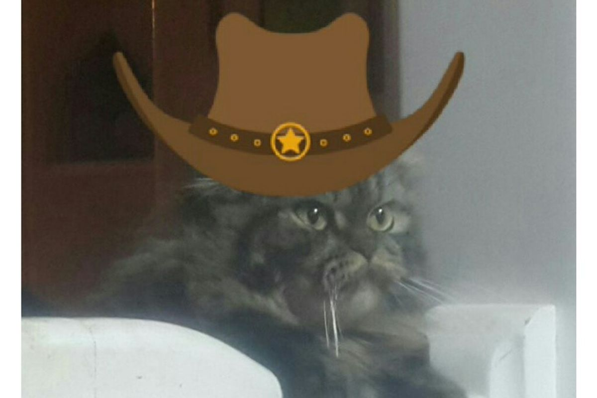 This cat thinks that she could be Uncle Pecos.