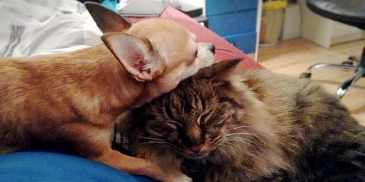 Lost Cat Came Home to His Best Friend who Missed Him..