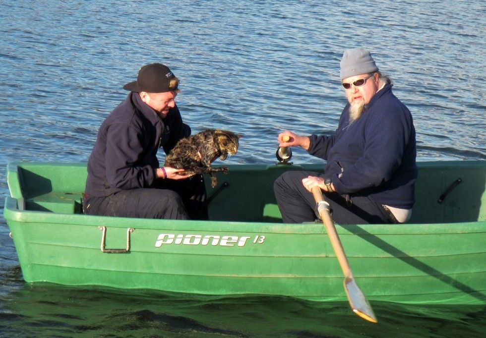 rangers save cat from reservoir after she plunged into water to chase bird