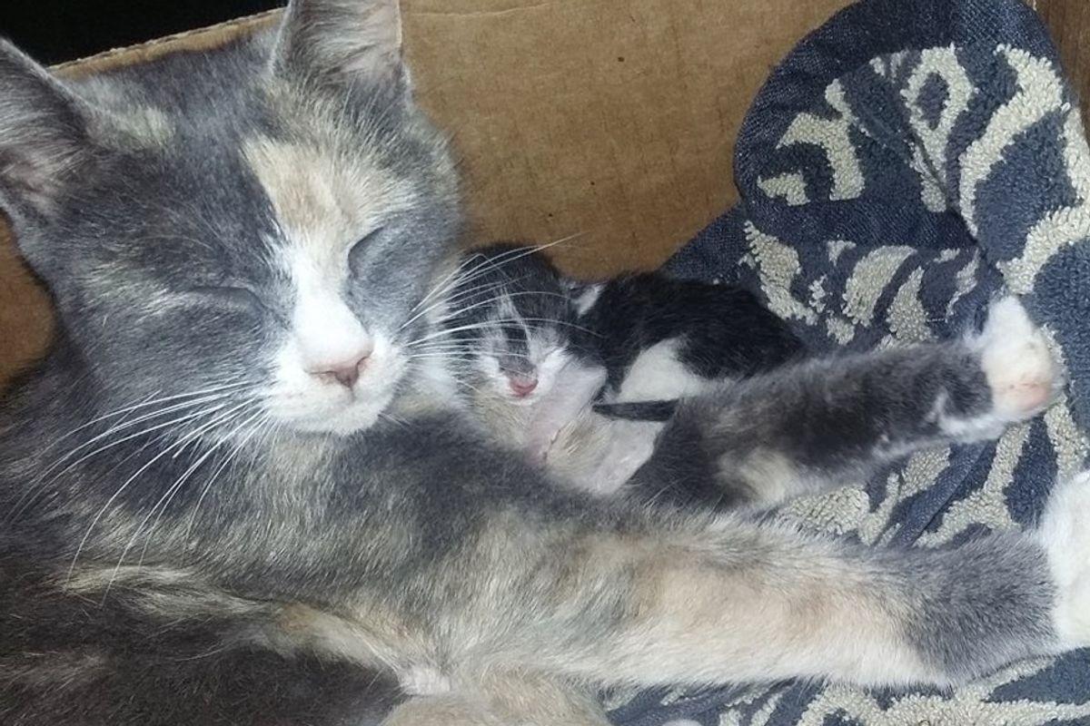 stray calico cat brings friend precious gift