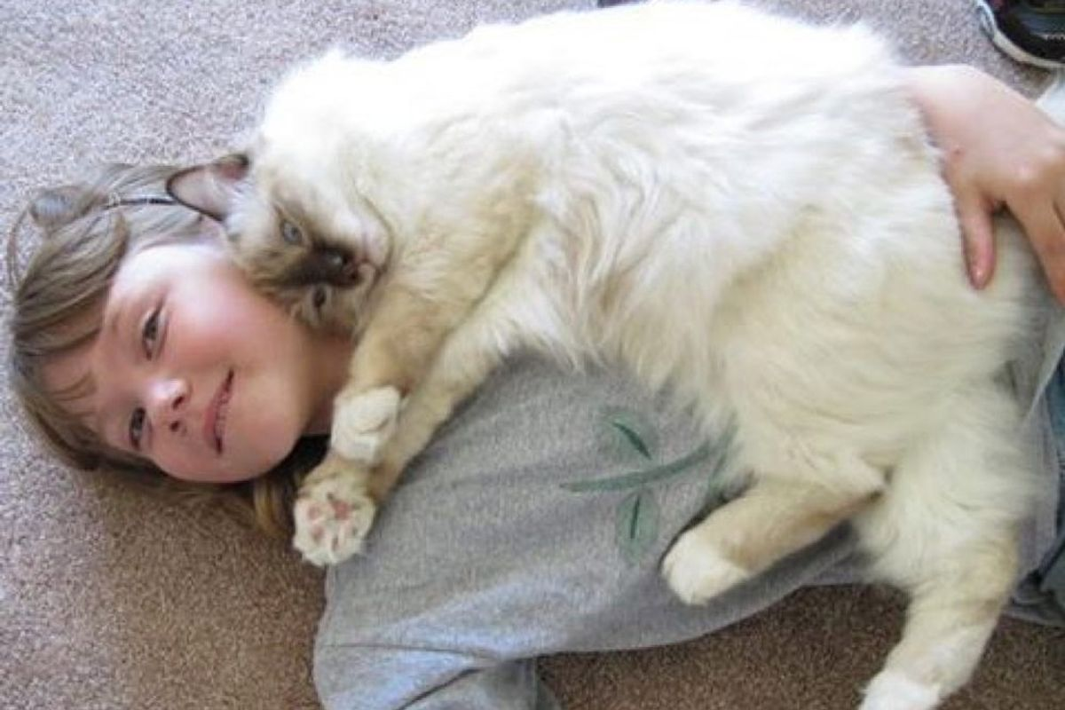 raul therapy cat helps children learn and read