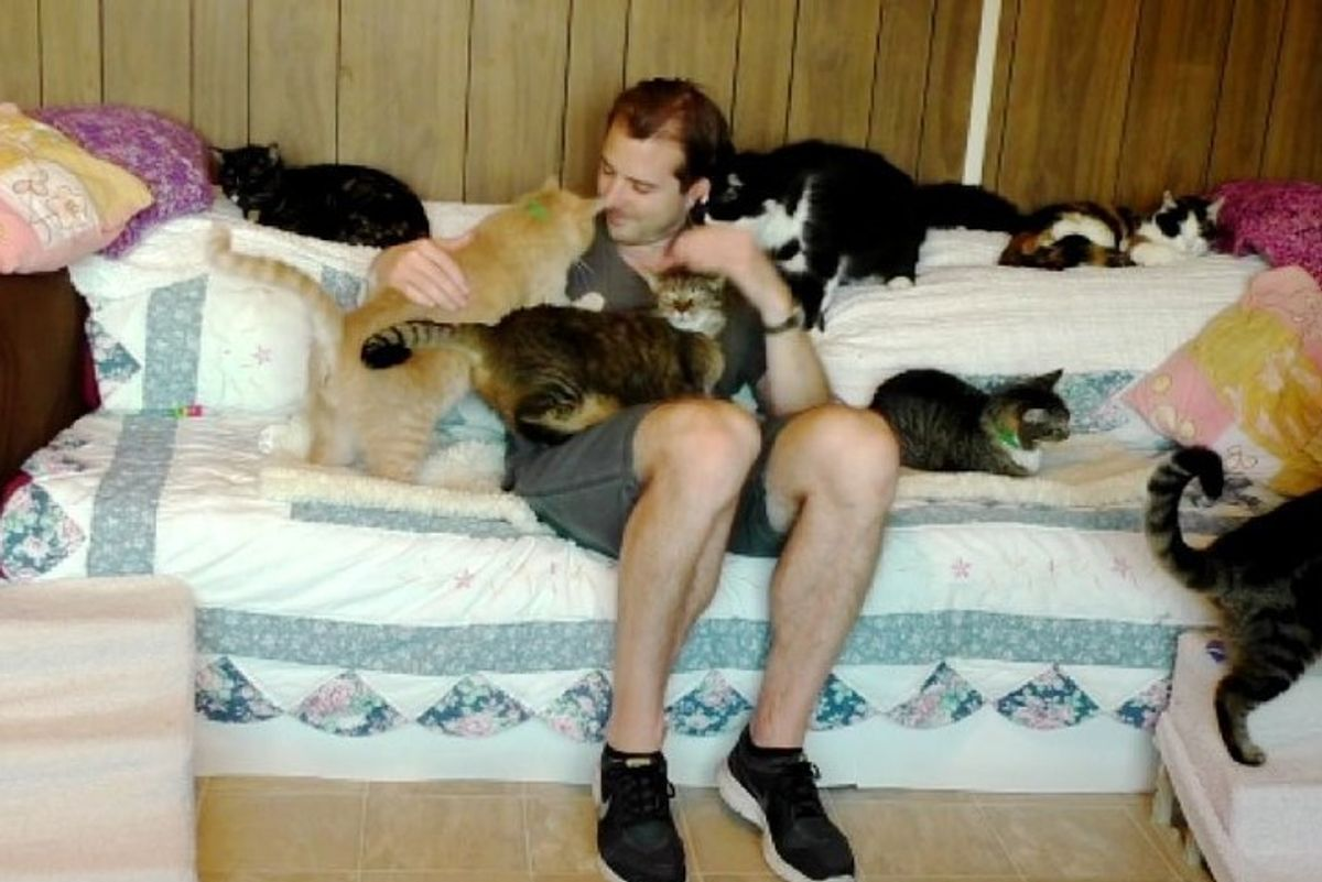 cat loving man gets kitty therapy from rescue cats the cat house on the kings