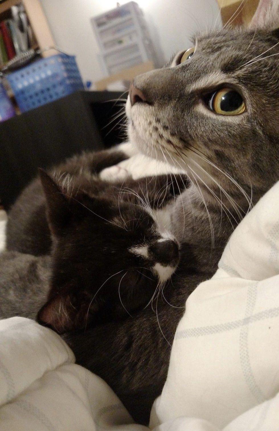 kitten rescued on driveway best friends cuddling
