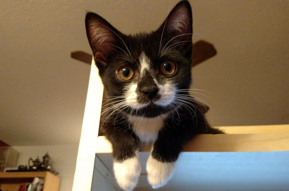 kitten rescued on driveway, 8 months later