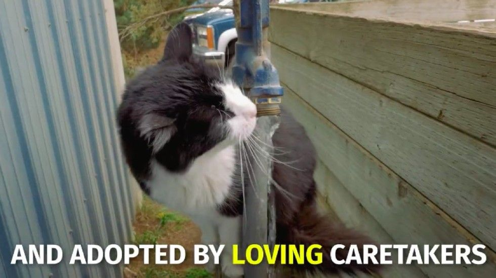 shelter saves homeless cats by giving them jobs