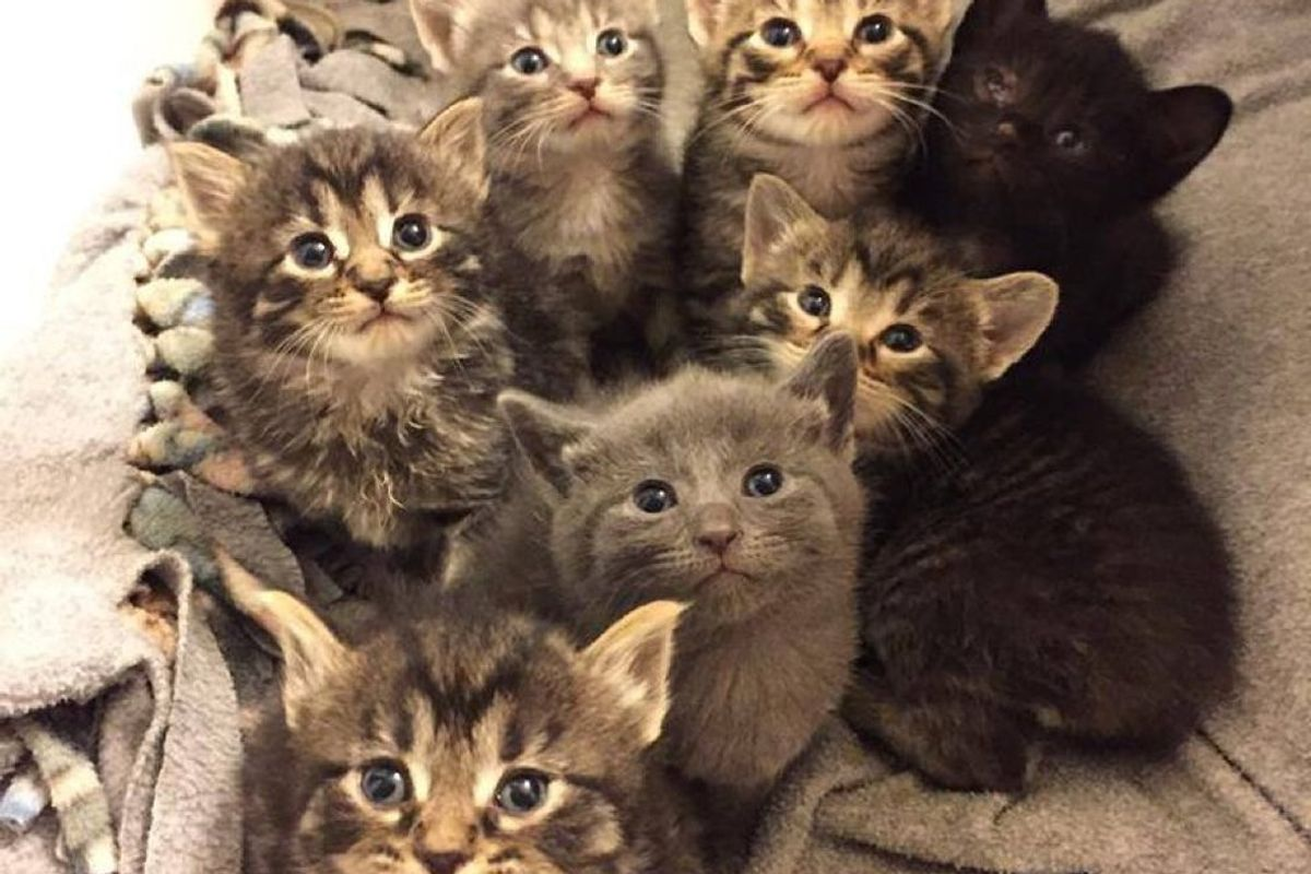 Stray Cat Found on Back Porch Brought Rescuers 7 Tiny Furballs