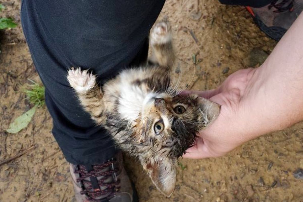 young man rescues stray kitten from woods
