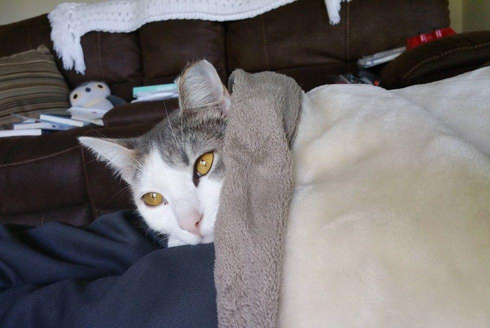 stray cat walks into home