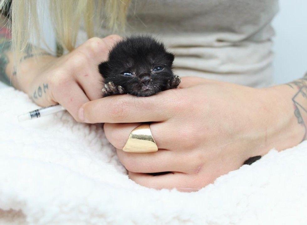 orphaned kitten bruno saved by kitten lady